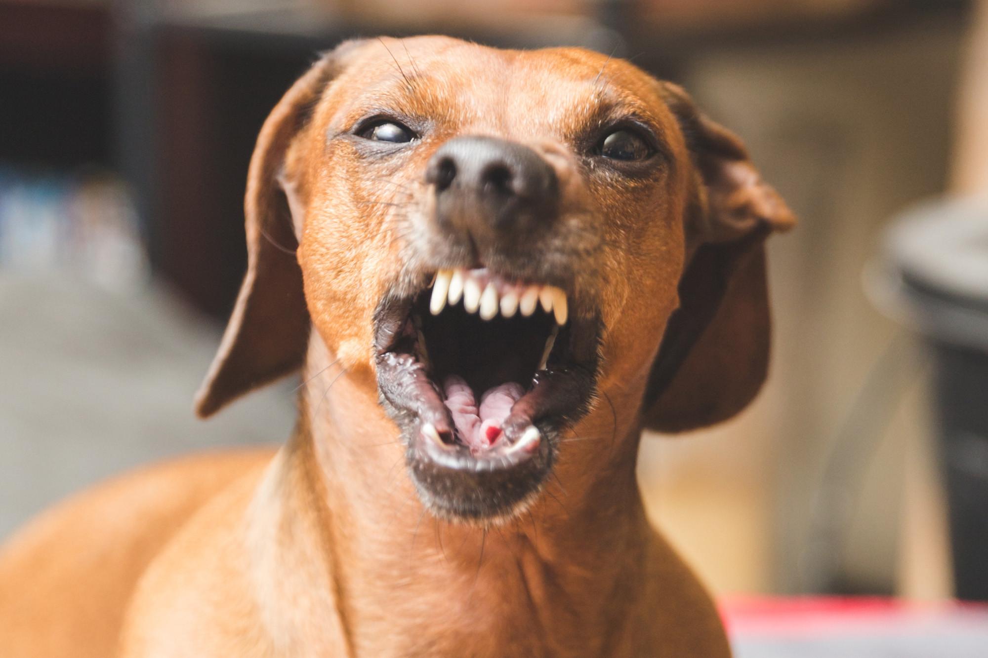 مقطع مصور لكلب وعلم الدولة يثيران غضبًا بالكويت ومطالبات بتدخل الداخلية (فيديو)