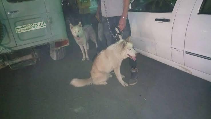 استخدام الكلاب.. أحدث أساليب شبيحة الأسد للتحرش بالفتيات في حلب