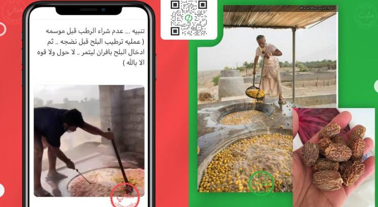 كارثة.. الرطب السامة تغزو الخليج وفيديو من سلطنة عمان يكشف الحقيقة
