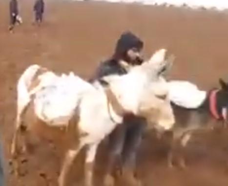 بشار وحافظ وماهر.. 3 حمير تنقل المساعدات إلى مخيمات النازحين في إدلب (فيديو)