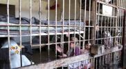 """حملة توقيع مليونية للضغط على """"نظام الأسد"""" للإفراج عن المعتقلات"""