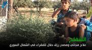"""الشفلح""""علاج مجاني ومصدر رزق حلال للفقراء في الشمال السوري"""