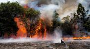 حرائق الغابات تمتد إلى السعودية.. شاهد اشتعال النيران في الأشجار (فيديو)