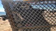 """""""هيكل عظمي بشري"""" داخل قفص حديدي يثير الذعر على شواطئ السعودية (صور)"""
