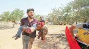 إحصائية أممية مرعبة لعدد الضحايا المدنيين في إدلب منذ نيسان الماضي