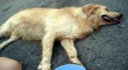 تحركات قانونية بعد انتشار أكلة لحوم الكلاب في الأردن!