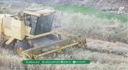 """تراجع إنتاج القمح في سهل الغاب 50%.. """"الدرر الشامية"""" ترصد الأسباب والحلول (صور)"""