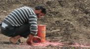 صعوبات يواجهها المزارعون بريف حماة.. ومهندس زراعي يقترح حلول