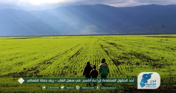 سهل الغاب في غرب حماة يخسر أهم موارده