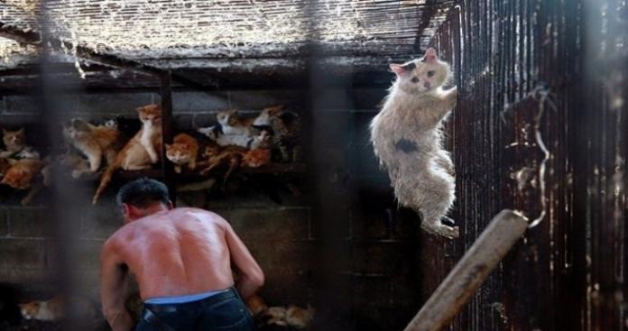 الحكومة الكويتية تكشف حقيقة غلق مطعم لبيع لحوم القطط والكلاب والفئران!