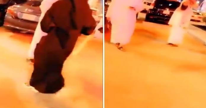 """شيخ سعودي يفاجئ حضور حفل """"الفرقة الكورية"""" بالرياض.. وردة فعل صادمة لأحد الفتيات (فيديو)"""