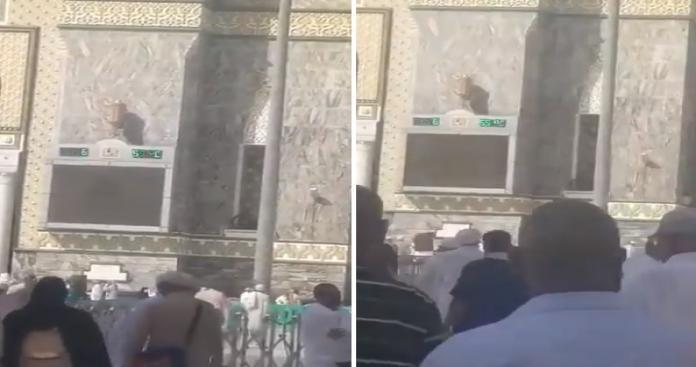 مشهد صادم من داخل المسجد الحرام.. هروب جماعي للمعتمرين والزوار من الساحات (فيديو)