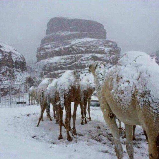 وحش جليدي يزحف نحو السعودية سيُجمد كل شيء في طريقة.. خبير طقس يرد